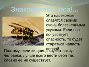 Знакомьтесь, оса!... Эти насекомые славятся своими очень болезненными укусами