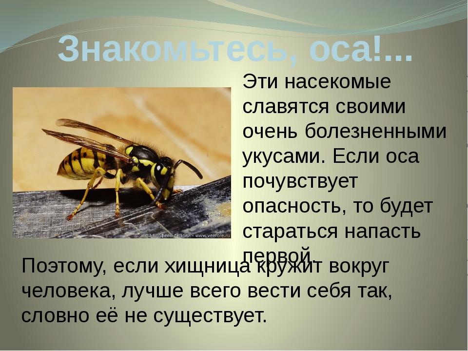 Знакомьтесь, оса!... Эти насекомые славятся своими очень болезненными укусами...