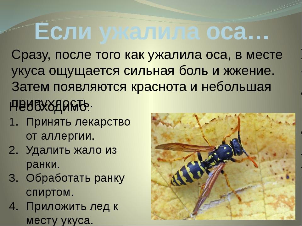 Если ужалила оса… Сразу, после того как ужалила оса, в месте укуса ощущается...
