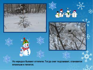 Но нередко бывают оттепели. Тогда снег подтаивает, становится влажным и лепит