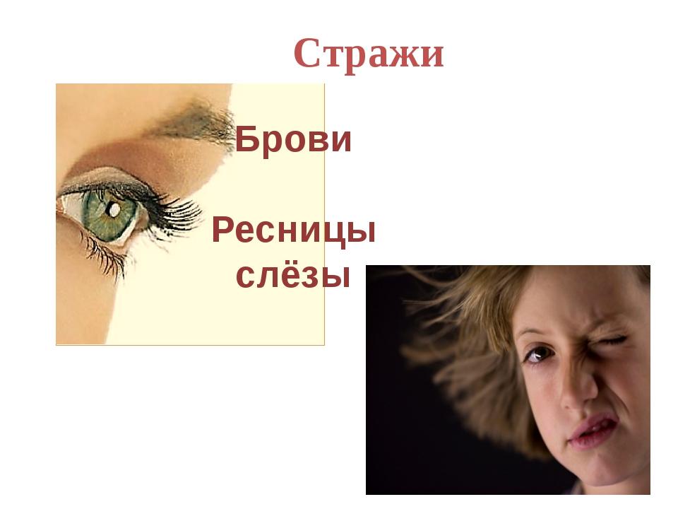 Брови Ресницы слёзы Стражи