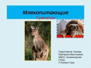 Млекопитающие Сумчатые Подготовила: Орлова Екатерина Васильевна МБОУ «Княжего