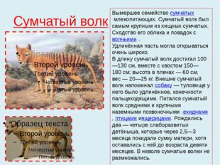Сумчатый волк Вымершее семействосумчатыхмлекопитающих.Сумчатый волк был са