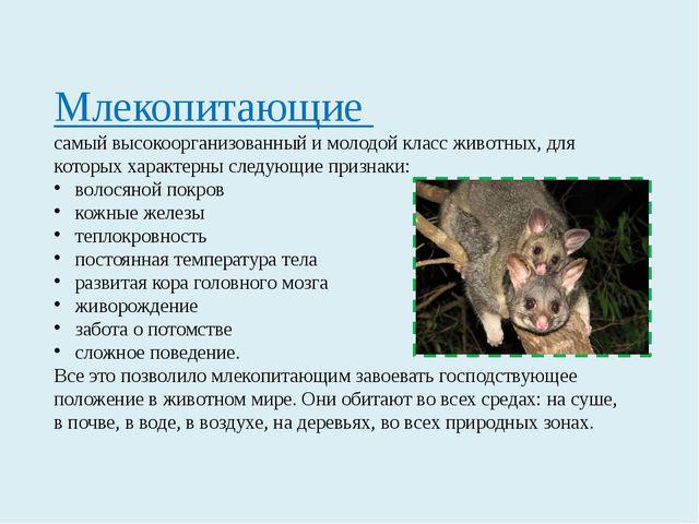 Млекопитающие самый высокоорганизованный и молодой класс животных, для которы...
