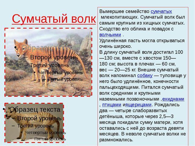 Сумчатый волк Вымершее семействосумчатыхмлекопитающих.Сумчатый волк был са...