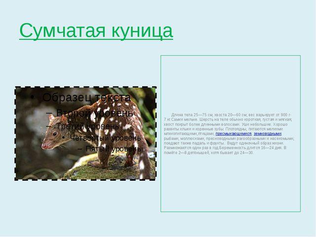 Сумчатая куница Длина тела 25—75см, хвоста 20—60см; вес варьирует от 900 г-...