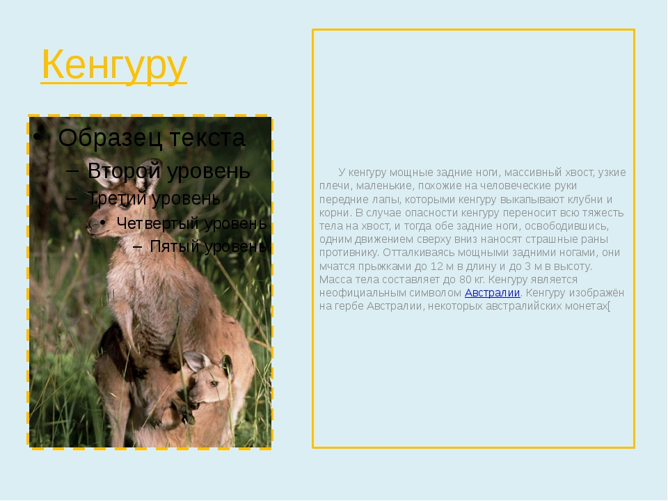 Кенгуру У кенгуру мощные задние ноги, массивный хвост, узкие плечи, маленькие...