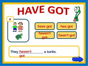 have got has got haven't got hasn't got They_____________ a turtle. haven't got