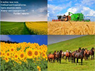 . Я люблю твои поля, Хлебный мой Башкортостан, Здесь медовая земля, Жемчуг мо