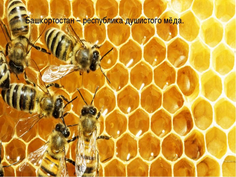 Башкортостан – республика душистого мёда.