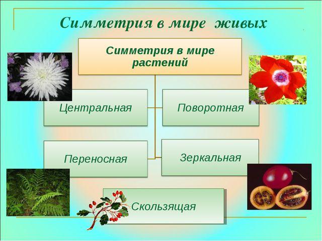 Симметрия в мире живых организмов Скользящая