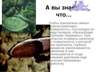 А вы знаете, что… Рыбы прилипалы имеют присасывающую поверхность, состоящую и