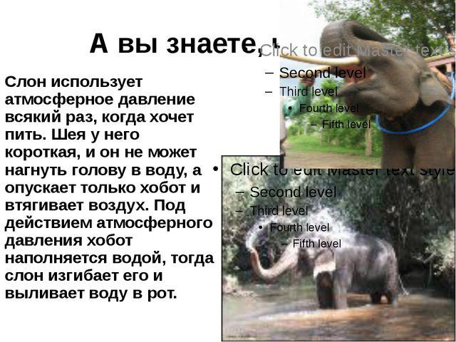 А вы знаете, что… Слон использует атмосферное давление всякий раз, когда хоче...