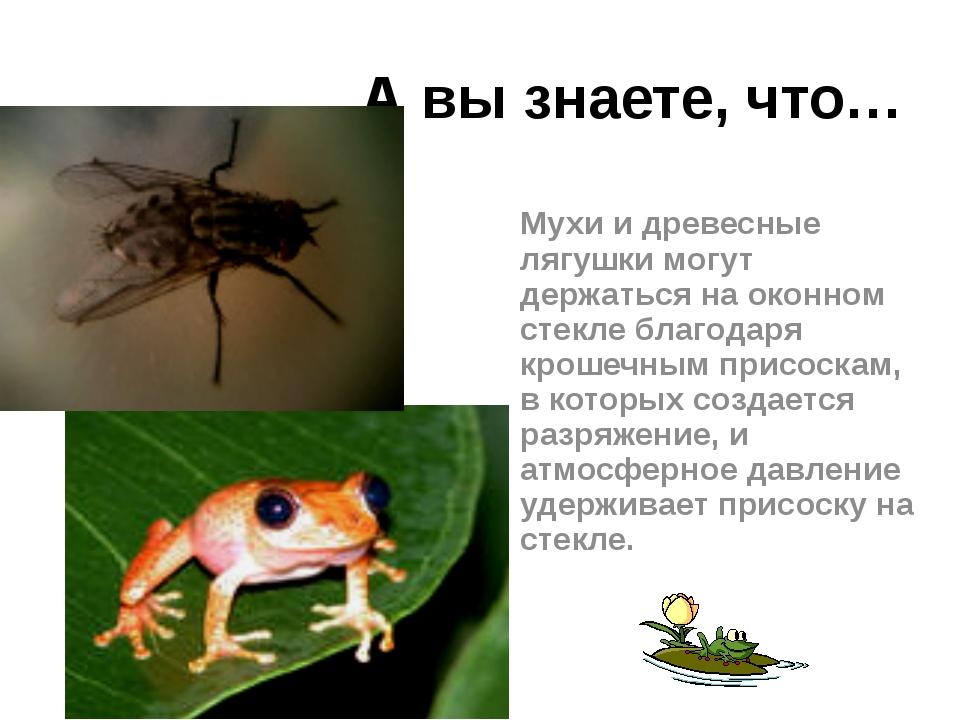 А вы знаете, что… Мухи и древесные лягушки могут держаться на оконном стекле...