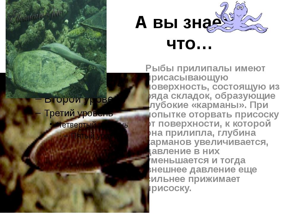А вы знаете, что… Рыбы прилипалы имеют присасывающую поверхность, состоящую и...