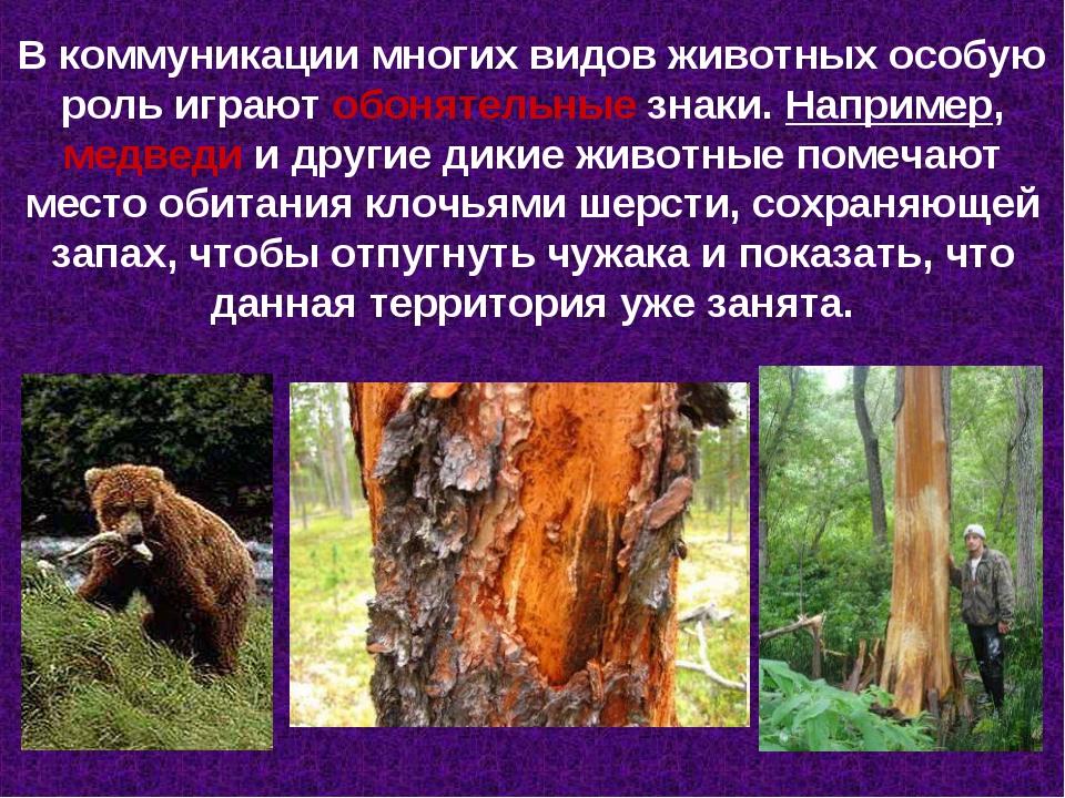 В коммуникации многих видов животных особую роль играют обонятельные знаки. Н...