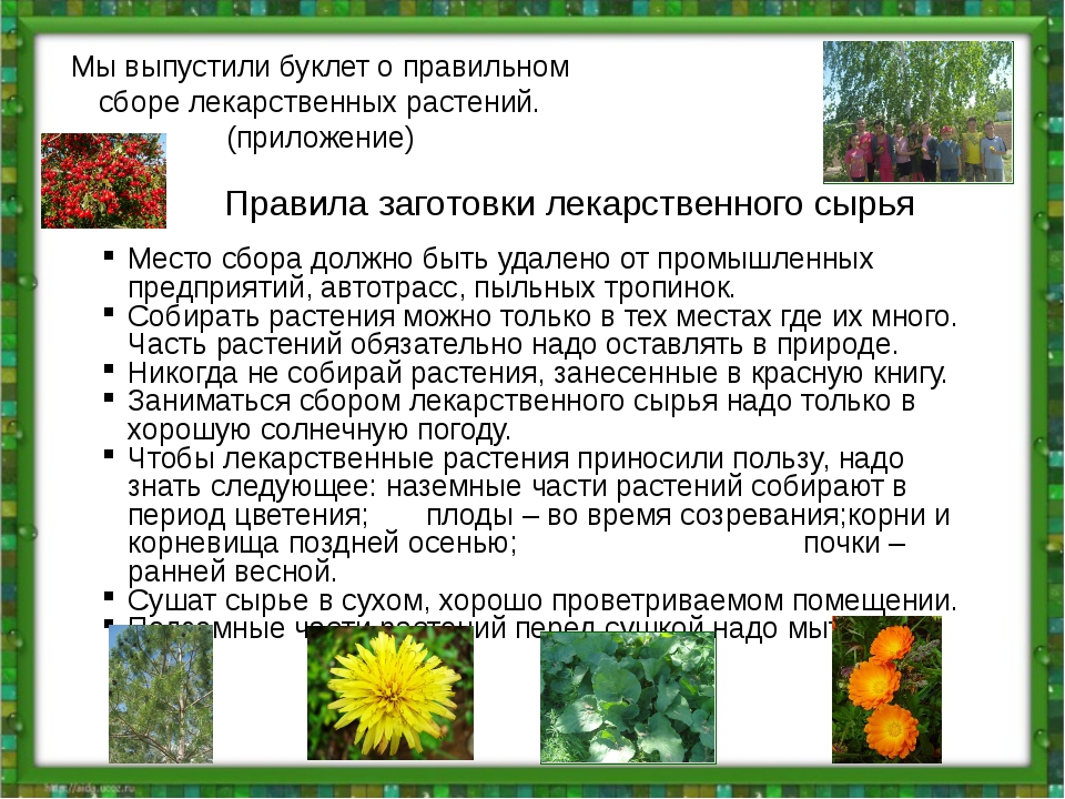 Мы выпустили буклет о правильном сборе лекарственных растений. (приложение) П...