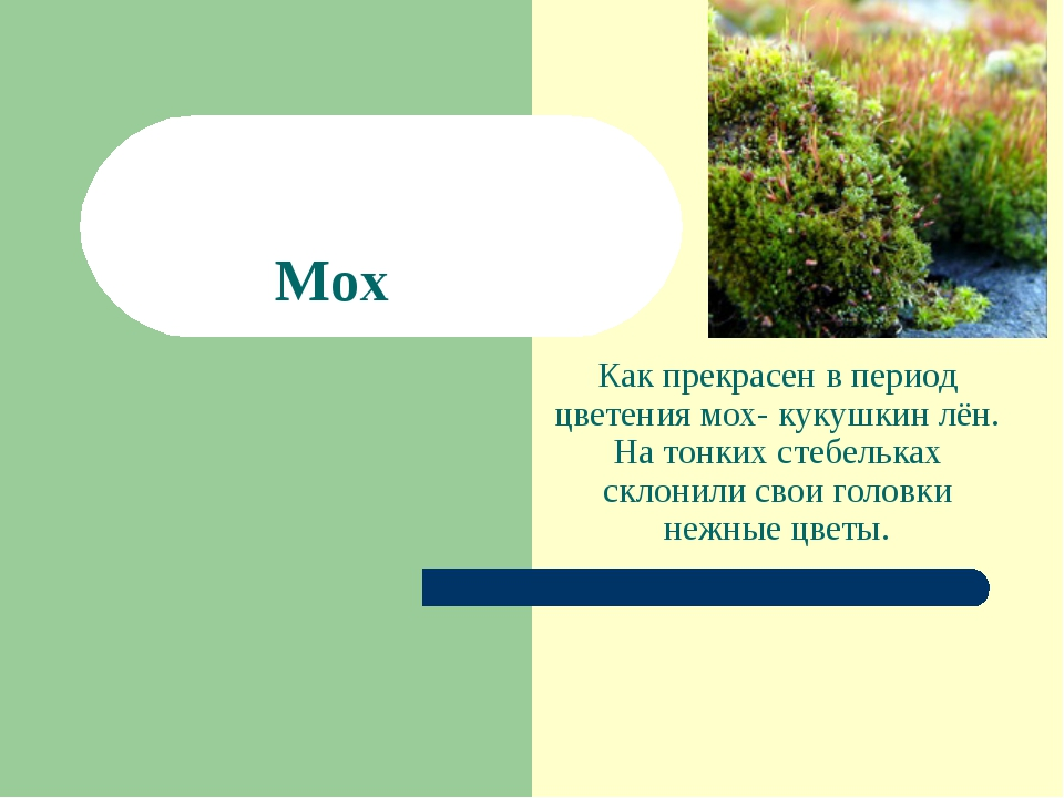 Как прекрасен в период цветения мох- кукушкин лён. На тонких стебельках склон...