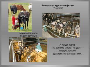 А когда коров на ферме много, их доят специальными доильными аппаратами. Ког