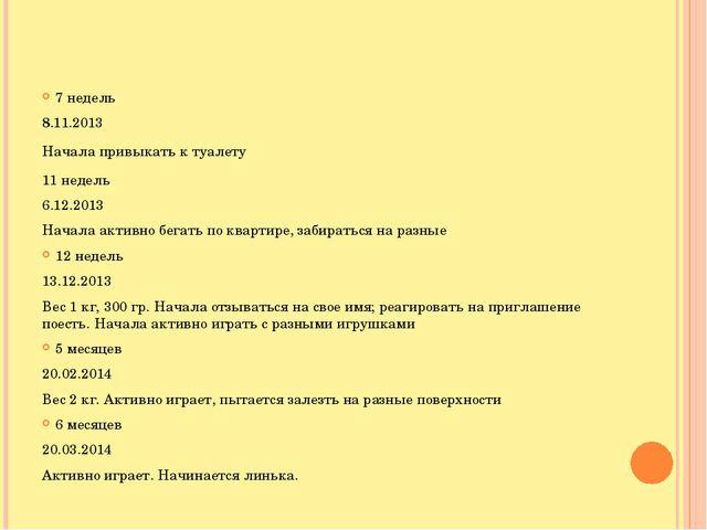 7 недель 8.11.2013 Начала привыкать к туалету 11 недель 6.12.2013 Начала акт...