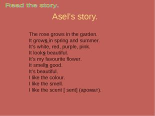 Asel's story. The rose grows in the garden. It grows in spring and summer. It