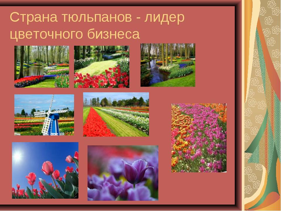 Страна тюльпанов - лидер цветочного бизнеса