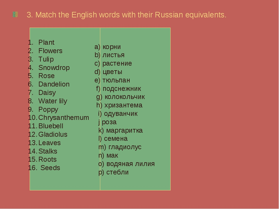 3. Match the English words with their Russian equivalents. Plant Flowers Tuli...