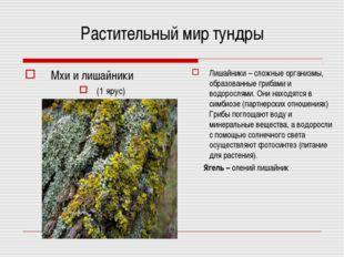 Растительный мир тундры Мхи и лишайники (1 ярус) Лишайники – сложные организм