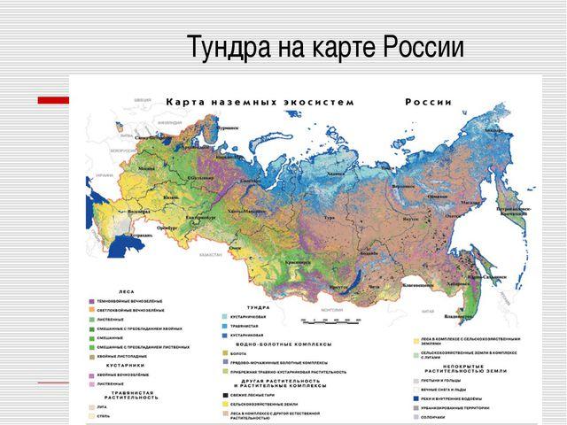 Тундра на карте России