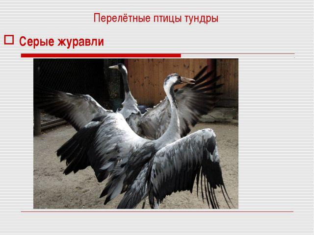 Перелётные птицы тундры Серые журавли