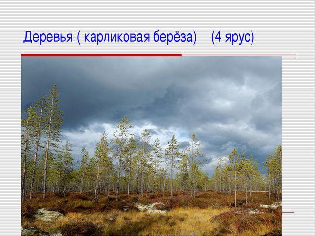 Деревья ( карликовая берёза) (4 ярус)