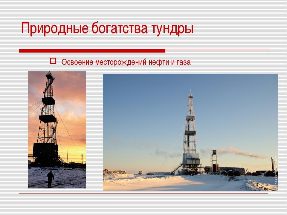 Природные богатства тундры Освоение месторождений нефти и газа
