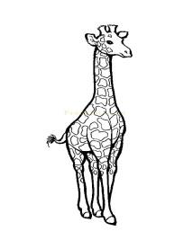 http://prodetstvo.ru/netcat_files/Image/giraffe3.jpg