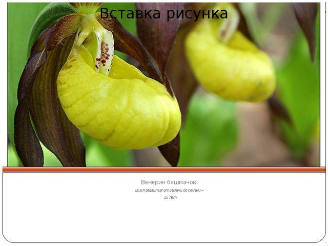 Венерин башмачок. Цикл развития от семени до семени – 15 лет