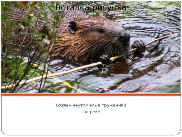 Бобры – неутомимые труженики на реке
