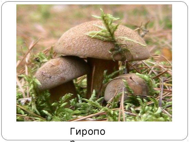 Гиропор