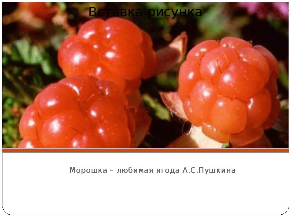 Морошка – любимая ягода А.С.Пушкина
