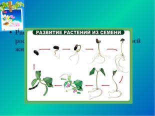 Растения обладают неограниченным ростом: они растут в течение всей своей жизни.