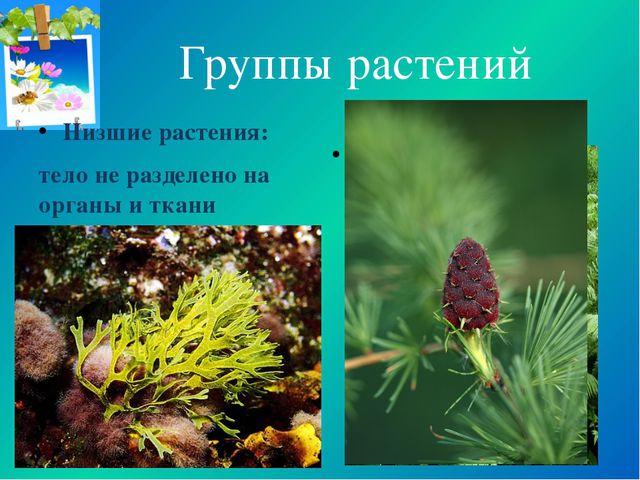 Группы растений Низшие растения: тело не разделено на органы и ткани (водорос...