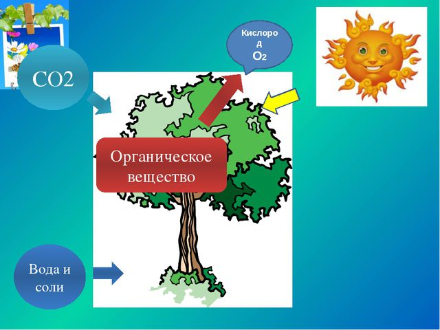 Вода и соли СО2 Органическое вещество Кислород О2