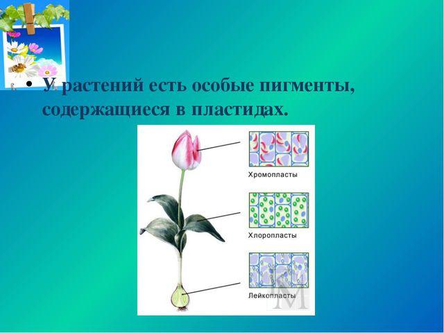 У растений есть особые пигменты, содержащиеся в пластидах.