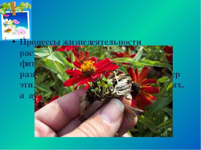 Процессы жизнедеятельности растительного организма регулируют фитогормоны, об...