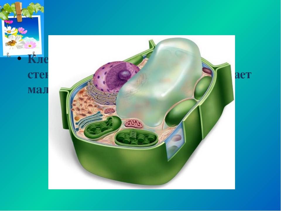 Клетки растений имеют клеточную стенку из целлюлозы, что обеспечивает малую п...