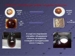 Развитие плесневелых грибов на других продуктах чай на 6-ой день мандарин на