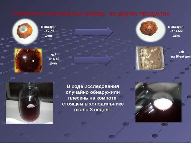 Развитие плесневелых грибов на других продуктах чай на 6-ой день мандарин на...