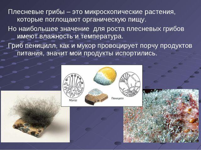 Плесневые грибы – это микроскопические растения, которые поглощают органическ...