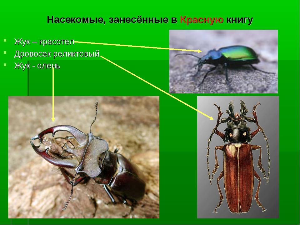Животные и насекомые из красной книги россии