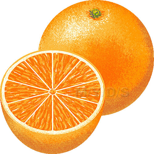 http://m-y-d-s.com/en/fruits/orange/a.jpg