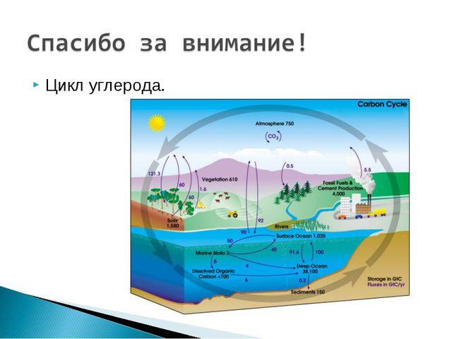 Цикл углерода.