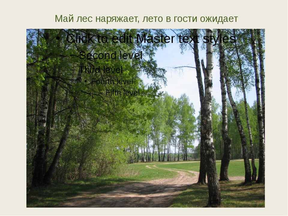 Май лес наряжает, лето в гости ожидает